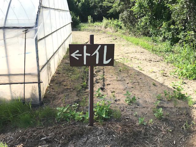 ブルーベリー農園こでらはトレイがきれい!